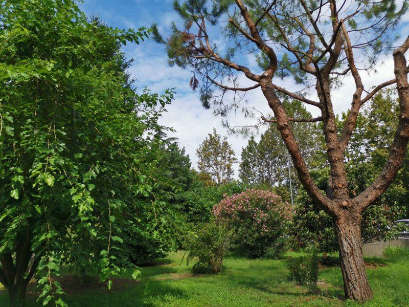 Pozzo Amicizia giardino